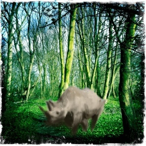 A Rhinoceros in Oakwood